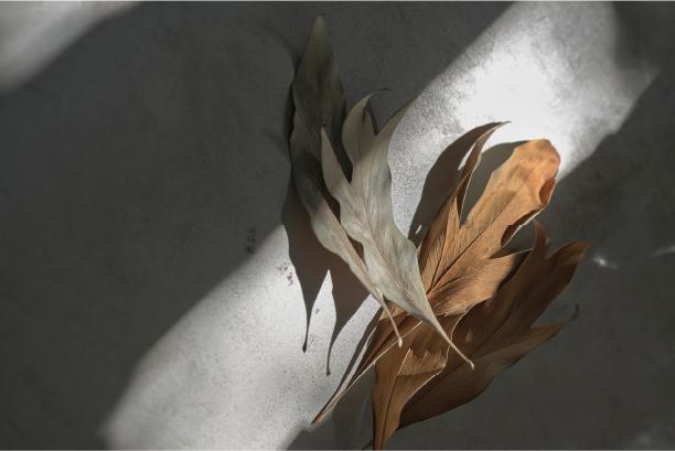 快適な冬を過ごせる、和紙の魅力